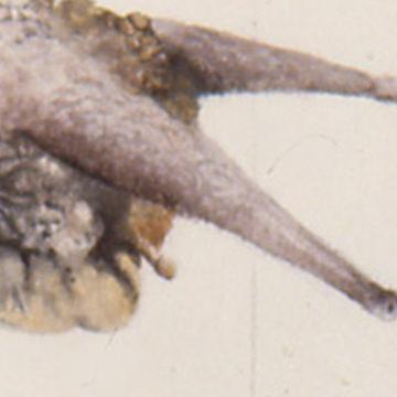 Grib Illustrations Featured Escargot