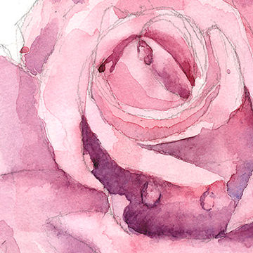 Grib Illustrations Featured Rose