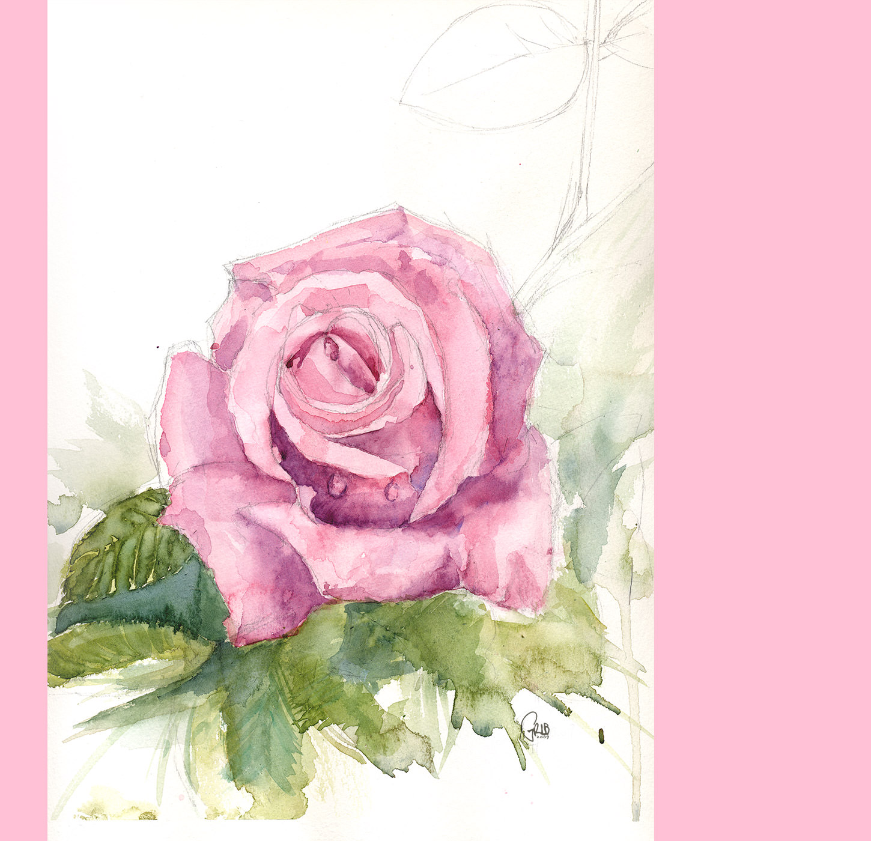 Grib Rose Aquarelle